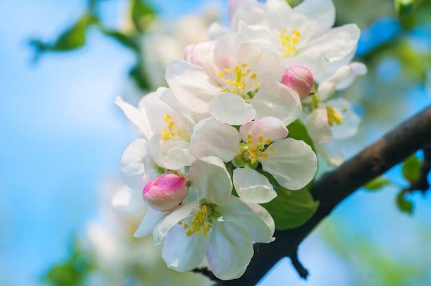 Blühender frühlingsbaum im gartenabschluß oben