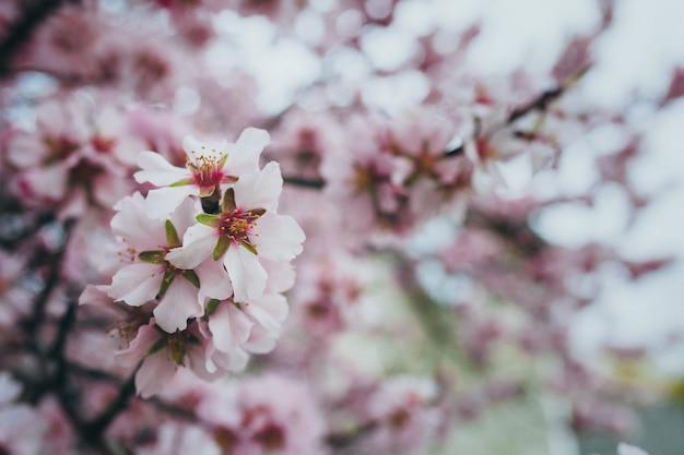 Blühender frühlingsgarten