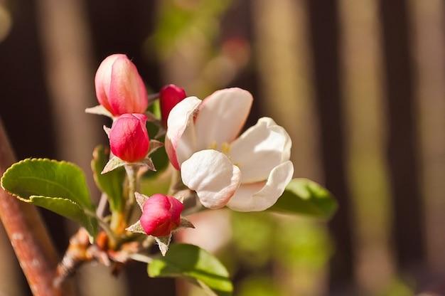 Blühender garten apfelbäume baum sommerblumen