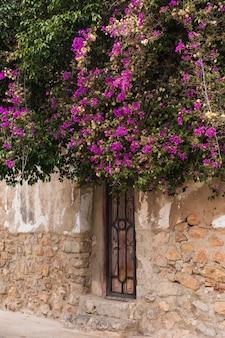 Blühender glyzinienbaum des frühlingsnatur- und stadtkonzepts, der ein haus an einem hellen sonnigen tag bedeckt