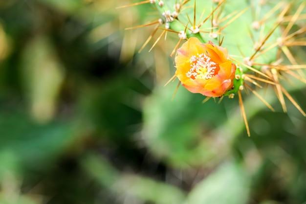 Blühender grüner garten der wilden wüstenkaktusblume