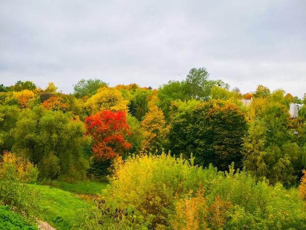 Blühender herbstwald. blühender herbstwald. orangenlaub von ahorn und anderen laubbäumen im frühherbst, warmes wetter im september