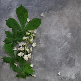 Blühender kastanienbaum auf einem grauen hintergrund, draufsicht, kopienraum, verspotten oben