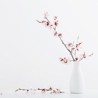 Blühender kirschzweig in der vase auf weißem hintergrund