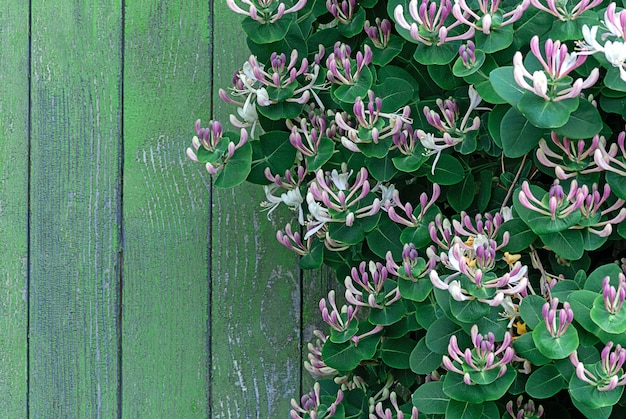 Blühender kletterer mit holzstiel an der holzwand