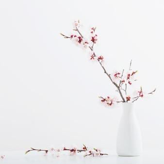 Blühender rosa kirschzweig in der vase auf weißem hintergrund