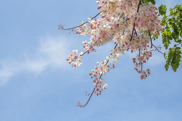 Blühender schöner und blauer himmelhintergrund der blume