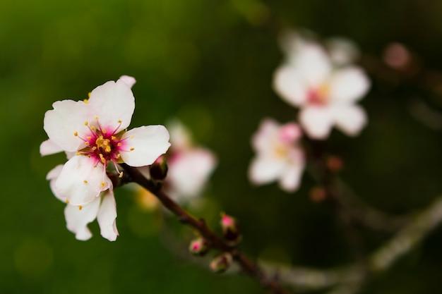 Blühender verschwommener baum im freien
