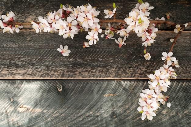 Blühender zweig auf dem alten hölzernen hintergrund. frühlingsblüte.