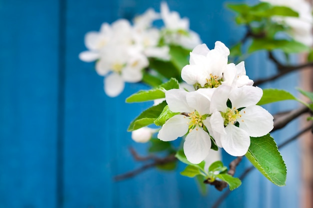 Blühender zweig des apfelbaums in einer quelle