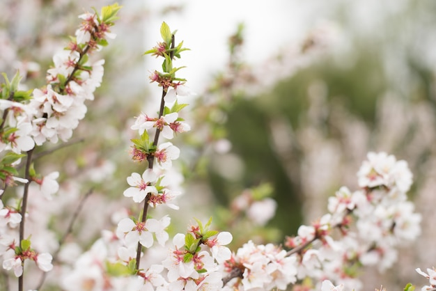 Blühender zweigapfel. helle bunte frühlingsblumen