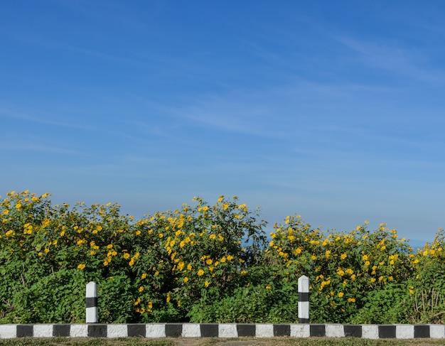 Blühendes moutain der wilden mexikanischen sonnenblume am sonnigen tag