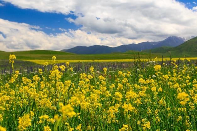 Blühendes wildes gras in den bergen