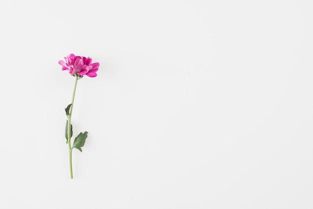 Blüht hintergrundexemplarplatz