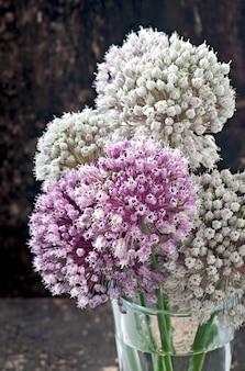 Blüht zwiebel auf altem holztisch