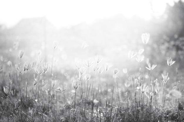 Blüte ruhig selektiven kopf natur stiel