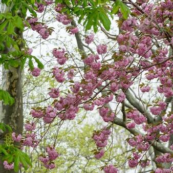 Blüten auf einem baum, liberty island, manhattan, new york city, bundesstaat new york, usa