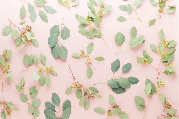 Blüten und eukalyptuszusammensetzung isoliert