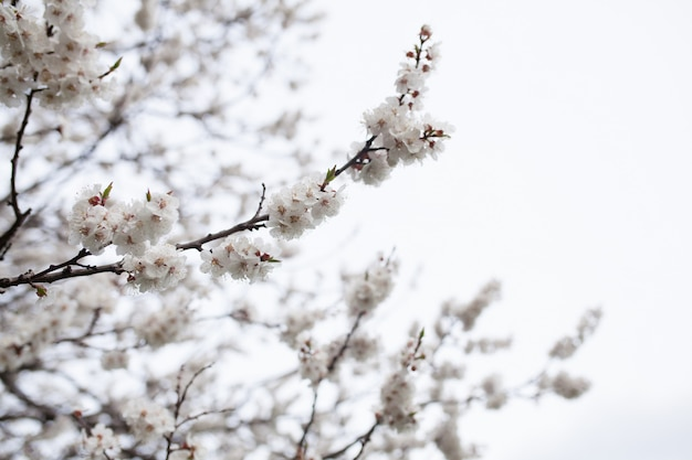 Blütenbaum über natur