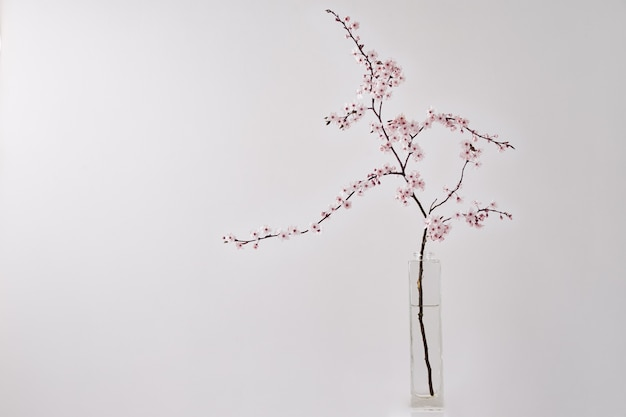 Blütenkirschbrunch in vase auf weißem tisch minimalistisches dekorkonzept