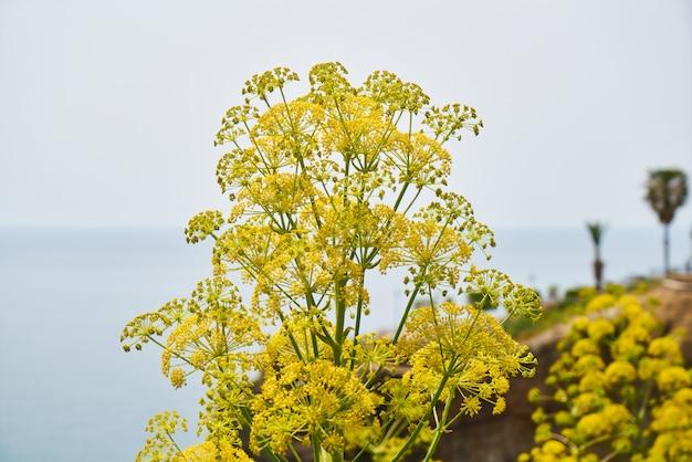 Blütenpflanzen in der natur