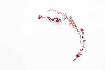 Blühende Zweige von wilden Blumen