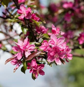 Blume auf dem baum, blühender baum