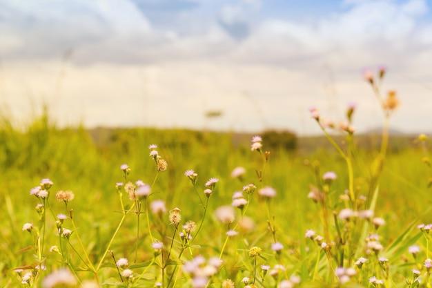 Blume auf dem gebiet und hintergrund der wolke.