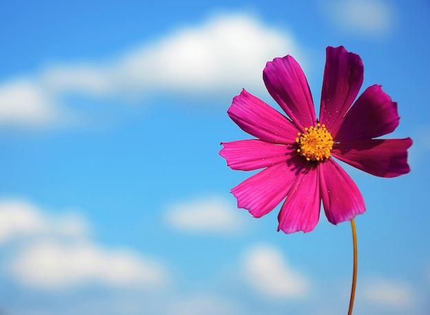 Blume auf einem hintergrundhimmel