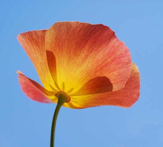 Blume auf himmelshintergrund