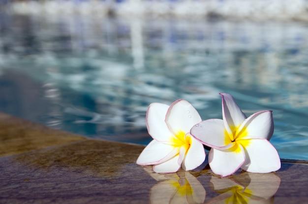 Blume auf schwimmbad
