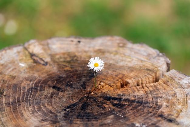 Blume auf trockenem baum