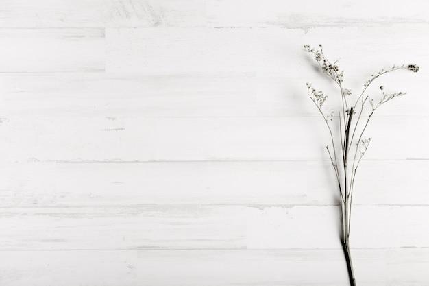 Blume auf weißem hölzernem wandhintergrund