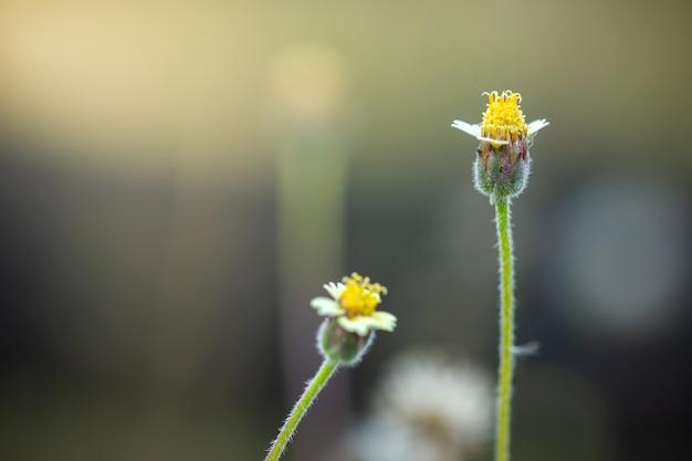 Blume des grases im grünen natürlichen garten