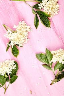 Blume des holunders auf rosa