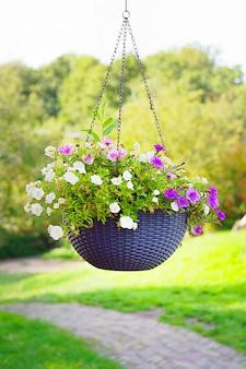 Blume hängt in einem topf