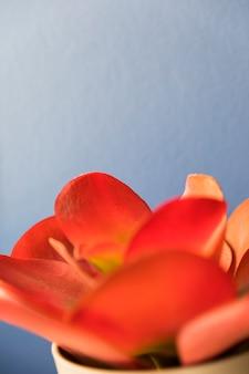 Blume hautnah