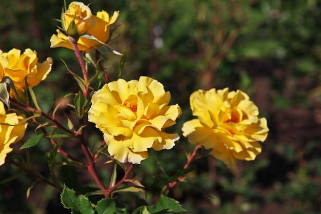 Blume im garten von rotorua, neuseeland