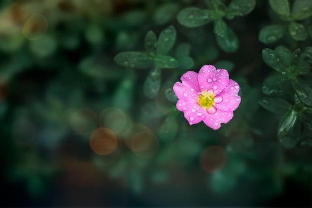 Blume in freier wildbahn