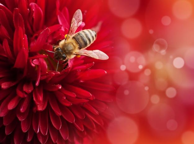 Blume mit biene, defokussierte lichter auf hintergrund