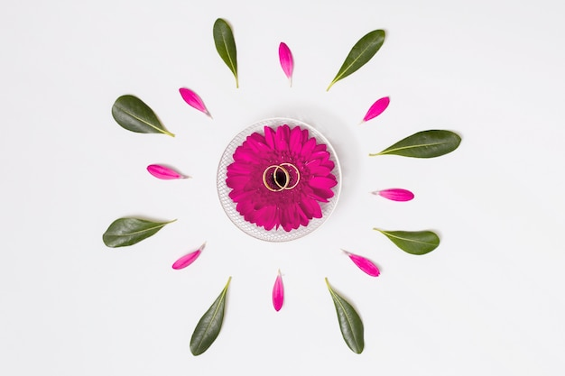 Blume mit ringen zwischen blütenblättern und laub
