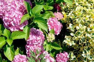 Blume sträucher