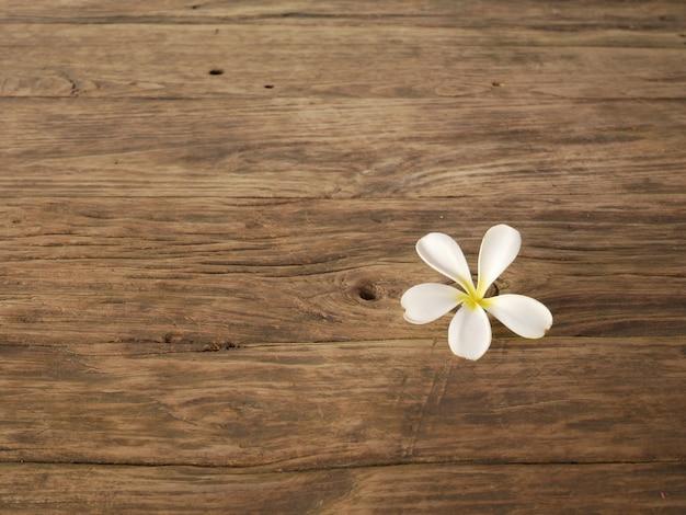 Blume und holz
