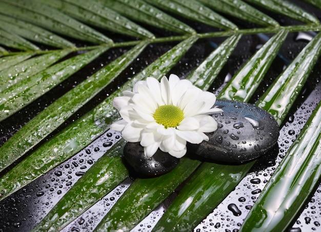 Blume und steine