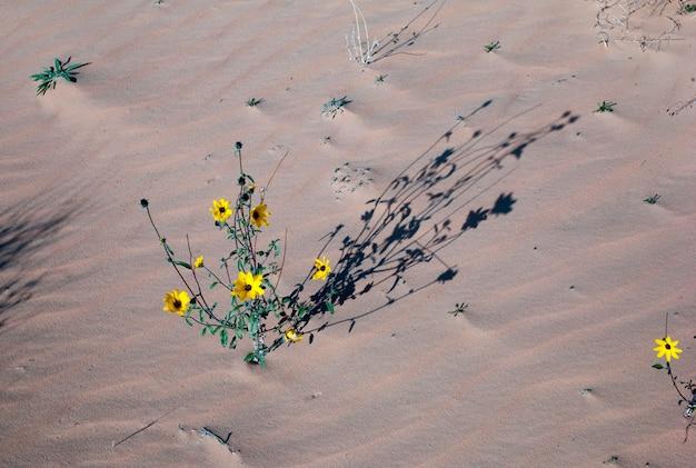 Blumen auf anlage in einer wüste, utah, usa