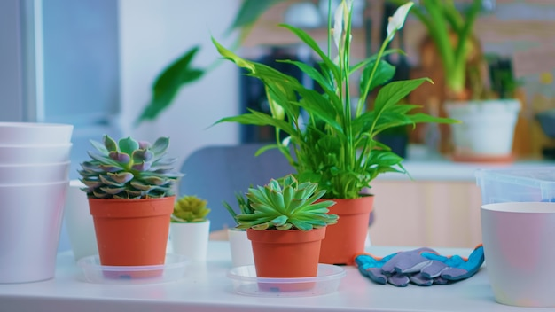 Blumen auf dem küchentisch zum nachpflanzen zu hause. düngererde mit einer schaufel in topf, weißer keramiktopf und blumenzimmerpflanzen vorbereitet für das pflanzen zu hause, hausgartenarbeit für hausdekoration