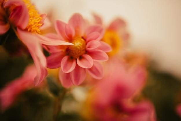 Blumen auf einem garten