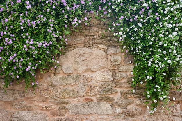 Blumen auf einem hintergrund der steinmauer