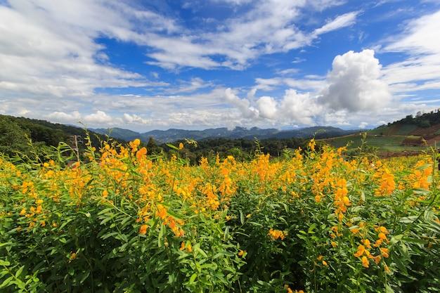Blumen auf hügel mit schöner landschaft, chiang mai, thailand