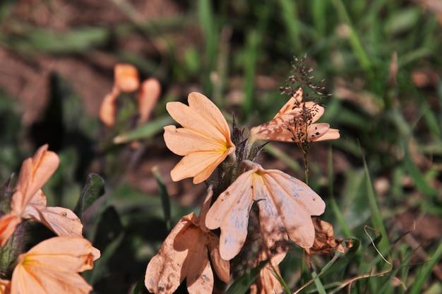 Blumen auf safari in kenia und tansania, afrika